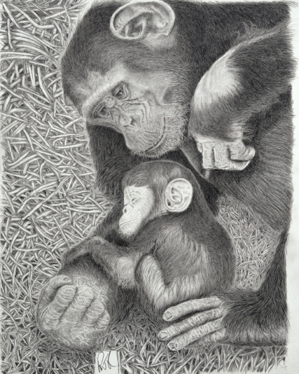 Chimp Baby and Mother 2