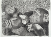 Chimp Baby and Mother